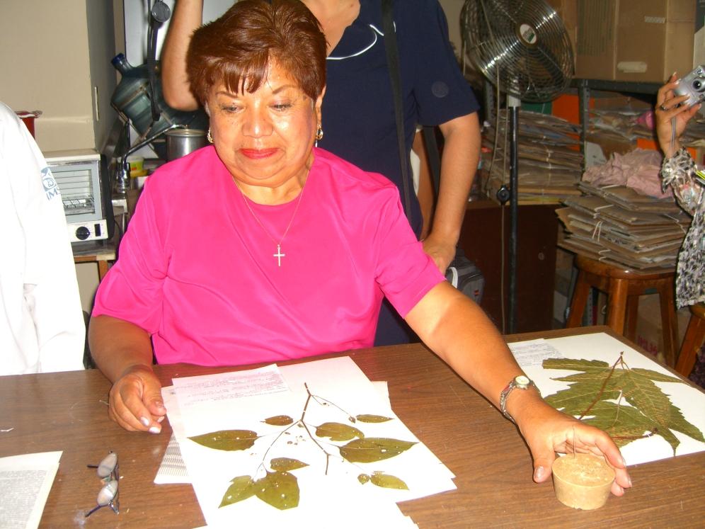 Herbario 2006 038